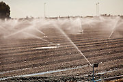 Freshly planted field being irrigated in the Imperial Valley Niland, CA.