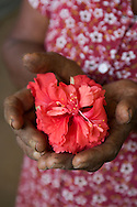 A woman holding a hibiscus, Sri Lanka..NOT FOR COMMERCIAL USE UNLESS PRIOR AGREED WITH PHOTOGRAPHER. (Contact Christina Sjogren at email address : cs@christinasjogren.com )
