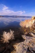 Evening light on salt covered Rabbit Brush along the south shore of Mono Lake, Mono Basin National Scenic Area, California