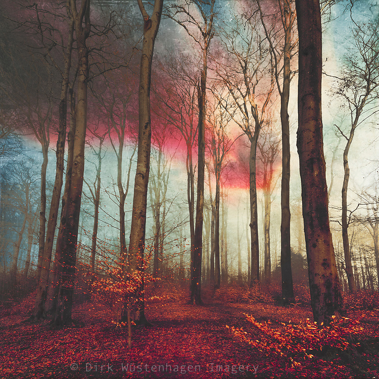 Forest scene on a winter evening - textured photograph