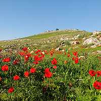 Flowers of the Field-Scenes