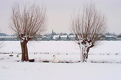 Kortenhoef, Wijdemeren Winter, koud, cold snow, sneeuw, winter, cold, wit, white