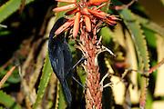 Ecuador, May 26 2010: Images from Hacienda San Agustin...Copyright 2010 Peter Horrell