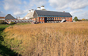 The concert hall viewed over reed beds, Snape Maltings, Suffolk, England