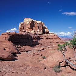 Canyonlands National Park, UT.Sandstone formation. Needles District. Juniper (utah), juniperus osteosperma.
