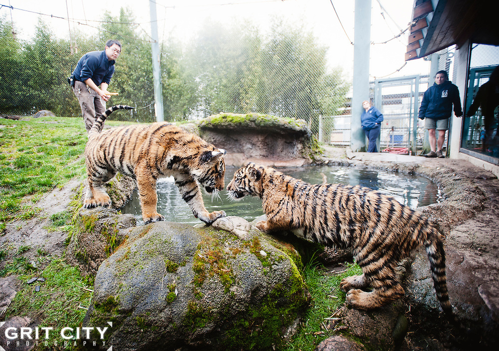 Grit City Photography for Point Defiance Zoo & Aquarium.