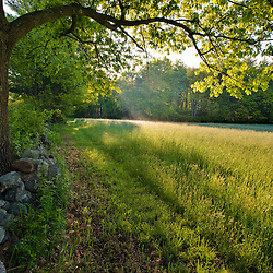 Early morning in a hay field at Windrush Farm in North Andover and Boxford, Massachusetts.
