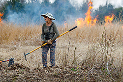 Volunteer managing fire line during controlled burn on Wilt's Prairie, a Blackland Prairie remnant near Ennis, Texas, south of Dallas. Texas, USA.