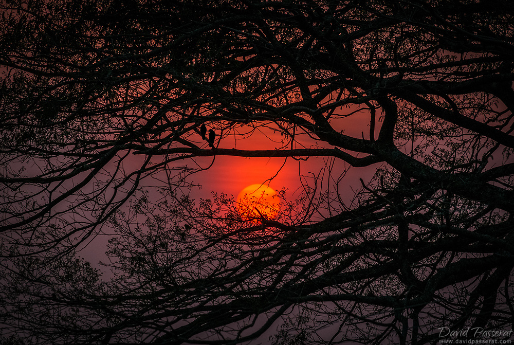 Red sunset through Minca jungle...