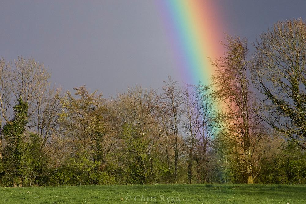 Rainbow in farmer's field, County Tipperary, Ireland