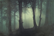 Mysterious misty forest scene on a fall morning<br /> <br /> Society 6 Prints & more:<br /> https://society6.com/product/im-not-my-usual-self_print#1=45