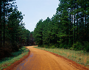 Forest road winding through southern pine forest, Kisatchie National Forest, Louisiana.