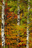Fall color on the Keweenaw Peninsula in the Upper Peninsula of Michigan, USA