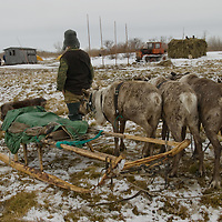 As rapidly-approaching spring melts snow in the Russian arctic,  nomadic Komi reindeer herders watch a tractor pull a load of hay (for horses and cattle) towards nearby Snopa village.