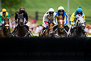 April 29, 2017, 22nd annual Queen's Cup Steeplechase. Racing action at the Queen's Cup