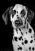 Dogs in black and white