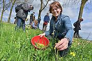 Nederland, Nijmegen, 27-4-2013Plukwandeling in de Ooijpolder. Mensen plukken wilde maar eetbare planten en bloemen om die vervolgens in een maaltje te verwerken en op te eten.Foto: Flip Franssen/Hollandse Hoogte