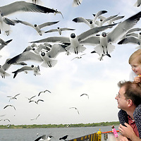 Molly Trahan, 3, of League City, ducks down from the gulls as they swarm down to get a piece of bread while sitting on her father Mike's shoulders in Galveston, 04/10/05.<br />   (Photo by Kim Christensen)