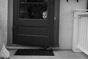 ©Colin McAuliffe, 2009