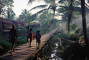 Sawa Village on the Pomats River in the Asmat, a large, steamy hot tidal swamp. Irian Jaya, Indonesia. Image from the book project Man Eating Bugs: The Art and Science of Eating Insects.