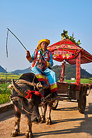 Chine, Province du Yunnan, Luoping, champs de Colza en fleur, char à buffle // China, Yunnan, Luoping, Fields of rapeseed flowers in bloom, buffalo chariot
