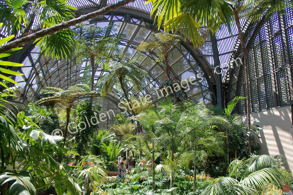 """Inside the Botanical Garden Building in Balboa Park. <br /> <br /> Originally built for the Panama-California  Exposition in 1915, the Botanical Building is one of the largest wood lath structures in the world.<br /> <br /> Balboa Park, located near downtown San Diego, is a historic architetural jewel featuring museums, an arts village, gardens, restaurants, hiking trails, The Old Globe theatre complex and the world famous San Diego Zoo. <br /> <br /> By the 1890's, under the auspices of Kate Sessions, """"The Mother of Balboa Park,"""" the park transformed from a unmanaged space of land into a lush landscape of popular plants including bird of paradise, queen palms and poinsettias. <br /> <br /> The 1915-16 Panama-California Exposition held in Balboa Park marked the opening of the Panama Canal and sparked the design of the Park as it appears today. Most of the arts organizations along Balboa Park's famous El Prado pedestrian walkway are housed in Spanish-Renaissance style buildings constructed for the 1915 Exposition. <br /> <br /> It introduced the beautiful ornamental architectural style to the United States."""