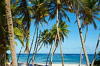 France, Martinique, Cap Chevalier, plage de l'Anse Michele// France, Martinique, Cap Chevalier, Anse Michel beach