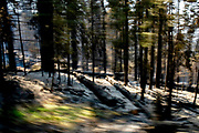 The aftermath of the Ferguson Fire and firefighters who cut down trees to cut off the fire's fuel off of Wawona Road at Yosemite National Park on Wednesday, Aug. 8, 2018, in Mariposa County, Calif.
