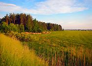 Aquatic Warbler habitat - Belarus