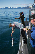 A salmon is getting released back into the ocean when fishing with Crackerjack Charters in Resurrection Bay on the southeastern tip of the Kenai Peninsula. <br /> <br /> Seward, Alaska, USA<br /> <br /> Photographer: Christina Sjögren<br /> <br /> Copyright 2019, All Rights Reserved