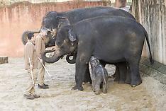 DEC 27 2012 Baby Elephant