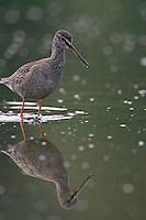 Mission: Black Storks River Elbe Germany; Biosphärenreservat Niedersächsische Elbtalaue; Biosphere Reserve Middle Elbe
