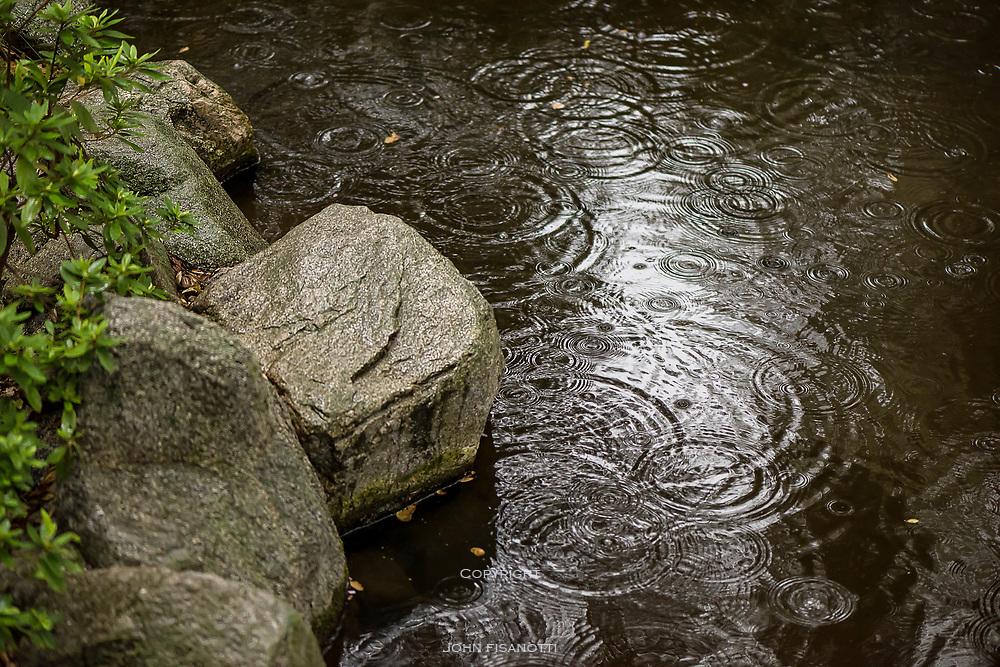 Rain falls on Descanso Gardens