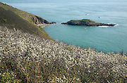 Coastal scenery south on the  Island of Herm, Channel Islands, Great Britain - the small islet of Putrainez