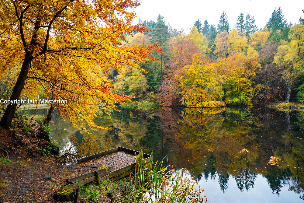 Autumn colours on woodland foliage at Loch Dunmore in Faskally Wood near Pitlochry in Perthshire, Scotland,UK