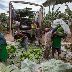Banana and cocoa farming, Fairtrade, Peru