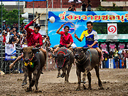 04 OCTOBER 2017 - CHONBURI, CHONBURI, THAILAND: Water buffalo racing in Chonburi. Contestants race water buffalo about 100 meters down a muddy straight away. The buffalo races in Chonburi first took place in 1912 for Thai King Rama VI. Now the races have evolved into a festival that marks the end of Buddhist Lent and is held on the first full moon of the 11th lunar month (either October or November). Thousands of people come to Chonburi, about 90 minutes from Bangkok, for the races and carnival midway.   PHOTO BY JACK KURTZ