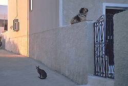 Cat looking the opposite direction from a dog