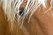 close up of horses head