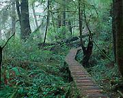 boardwalk, rainforest<br />