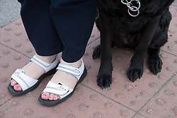 Guide dog and owner waiting at the kerb,
