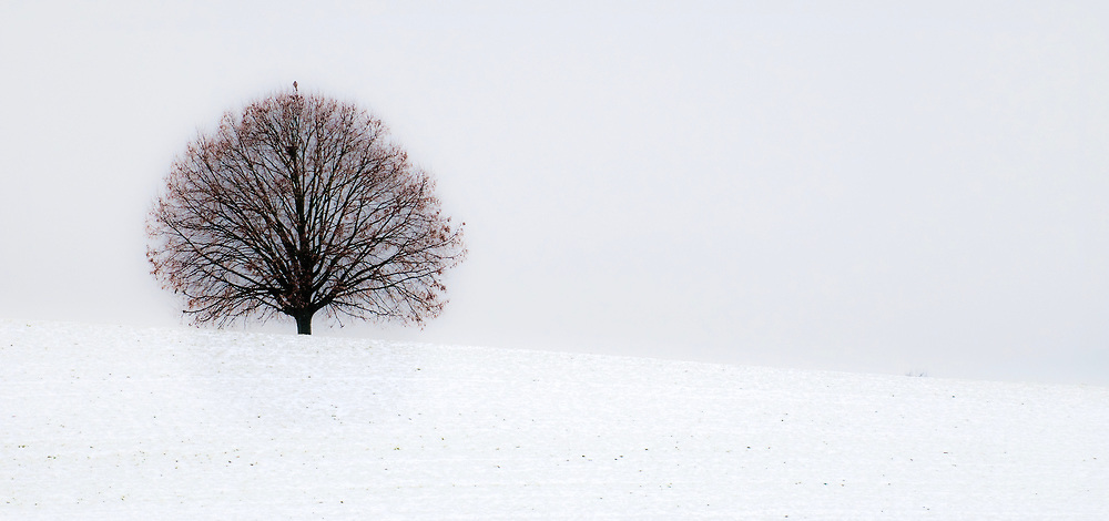 Wide picture of tree  on snowy slope