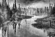 Trees in fog  over wetland at sunrise <br />Chibougameau<br />Quebec<br />Canada