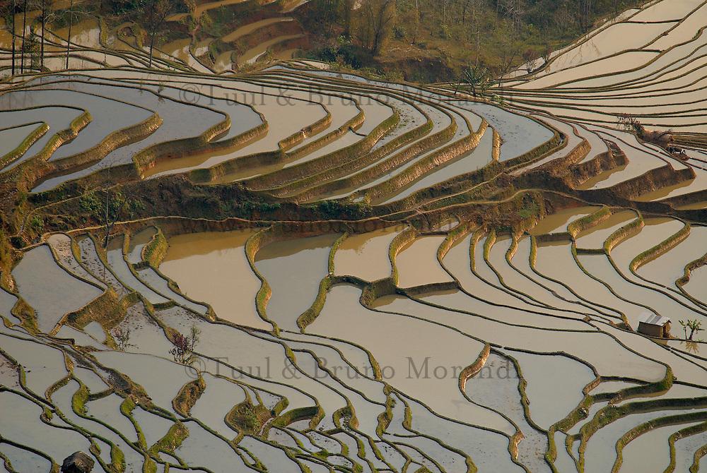 Chine. Province du Yunnan. Yuanyang, rizieres en eau. // China, Yunnan, Yuanyang, terraced paddy-fields