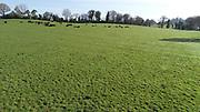 15-4-20 Aerial Photo Angus cattle, Grazing, Pasture,