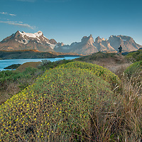 """The Grand Tower of Paine (L) and Horns of Paine tower above Lake Pehoe and thorny shrubs called """"Mother-in-law's cushion"""" in Torres del Paine National Park, Chile."""