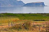 Crested Lark (Galerida cristata). Lake Prespa National Park, Albania June 2009