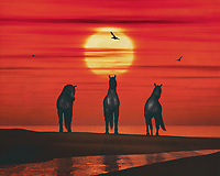 Three horses stand on the beach by the sea; it is sunset and a seagull flies in the red evening sky.This atmospheric work can be purchased in various materials and formats. –<br /> -<br /> BUY THIS PRINT AT<br /> <br /> FINE ART AMERICA / PIXELS<br /> ENGLISH<br /> https://janke.pixels.com/featured/three-horses-on-the-beach-jan-keteleer.html<br /> <br /> <br /> WADM / OH MY PRINTS<br /> DUTCH / FRENCH / GERMAN<br /> https://www.werkaandemuur.nl/nl/shopwerk/Drie-paarden-op-het-strand/801649/132?mediumId=1&size=70x55<br /> –<br /> -