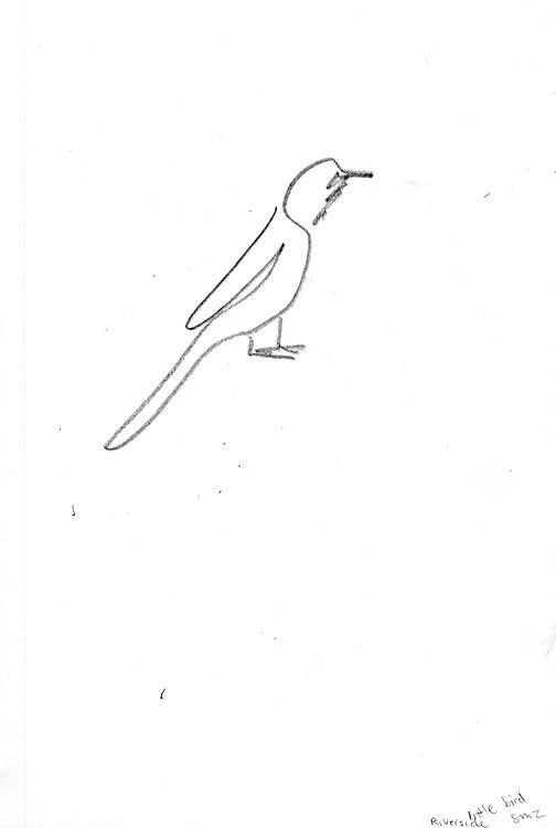 """Little Bird – 5.5""""x8.5"""", Graphite on paper, 2011"""