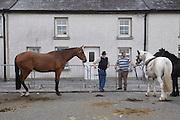 Tallow Horse Fair, Tallow, County Waterford, Ireland. 3 September 2014.